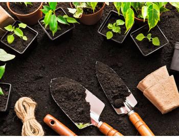 Как высаживать садовые деревья и кустарники ?